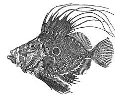 restaurante-quince-pescado