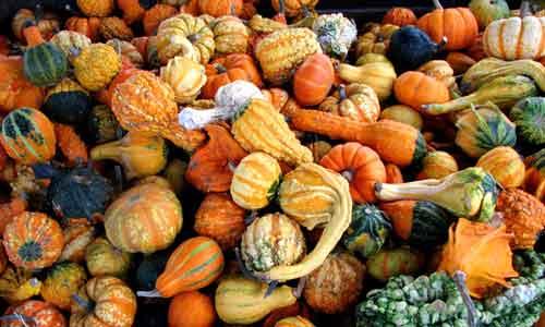 gourds-1322511